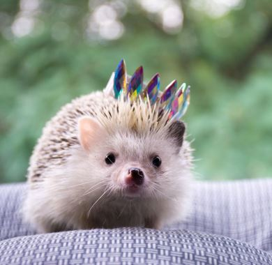 cute hedgehog mobile