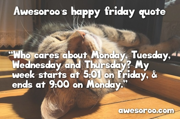 lazy cat with friday quote