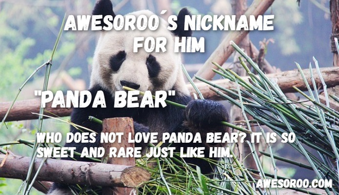 panda bear pet name