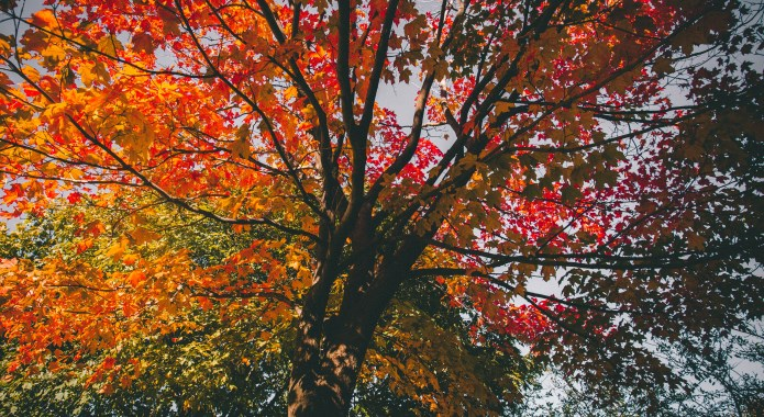 autumn colors on tree leaves desktop