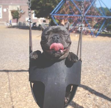 cute dog mobile