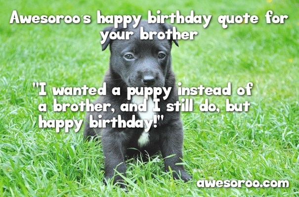 cute puppy with birthday quote