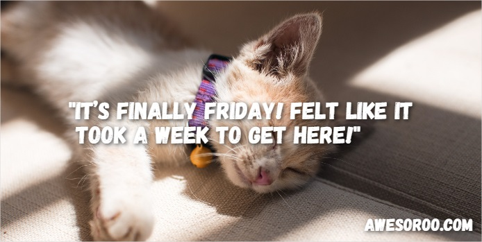 Image result for happy friday cat images with words